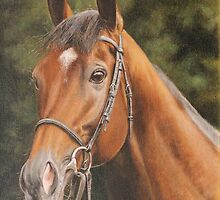 "Fine art Thoroughbred horse portrait "" Sakhee"" by barryjdavisart"
