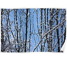 Ice Crystal Forest Poster