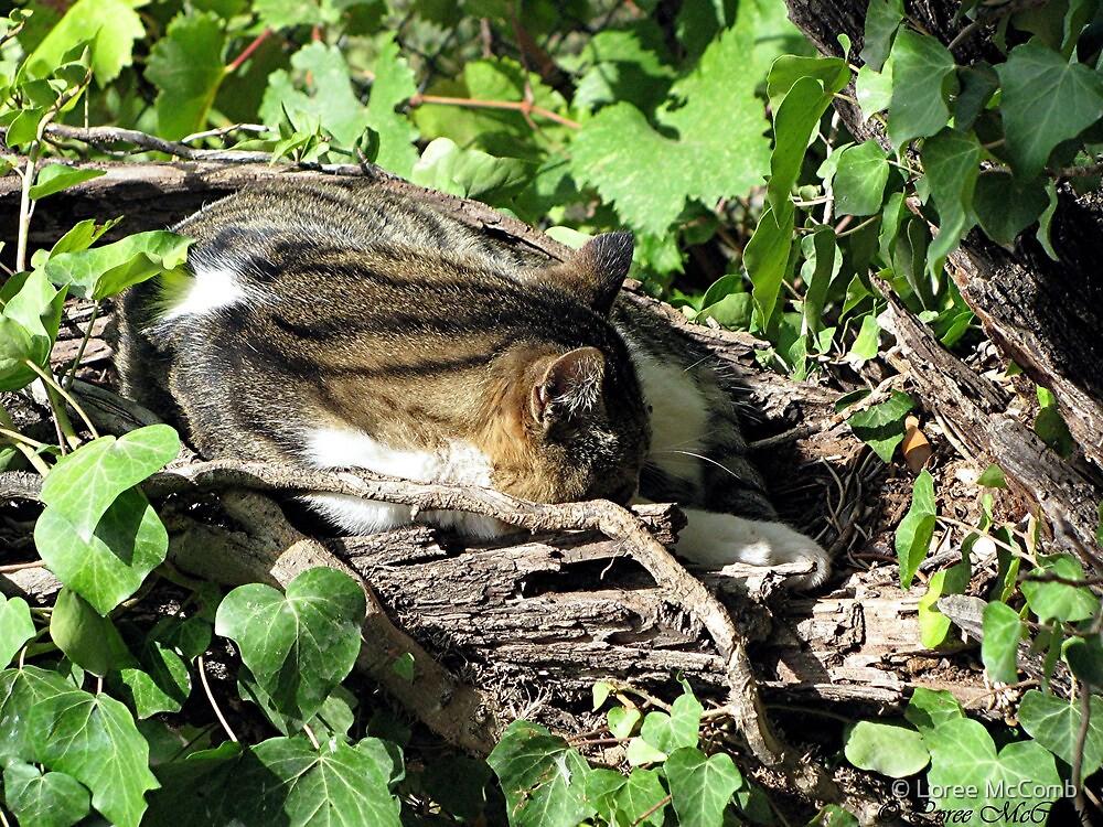 Tree Cat House by © Loree McComb