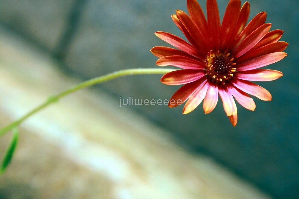 flower by juliweeeeee