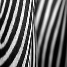 Zebra case by TaniaLosada