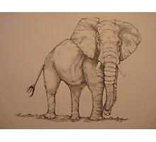 Africana Elephanta, Loxodanta Africana  Photographic Print