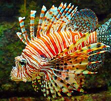 lionfish by Paul Dulac