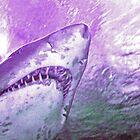 shark by Paul Dulac