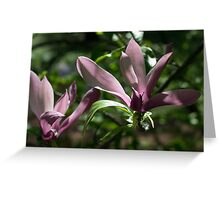 Magnolia tree in blossom Greeting Card
