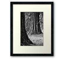 Tree Trunks, Batsford Arboretum 2012 Framed Print