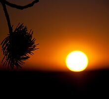 Sunset Silhouette by Colin Butterworth