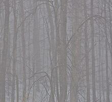 Fog, bring it on by Carolyn Clark