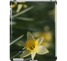 Daffodil in Springtime iPad Case/Skin