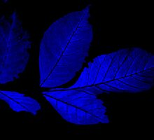 """""""Blue Leaves"""" by lx555"""