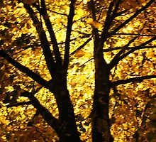 Shining night by Thewyrdtree