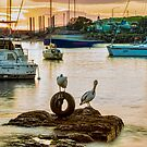 Boats, Pelicans & a sunrise by 16images