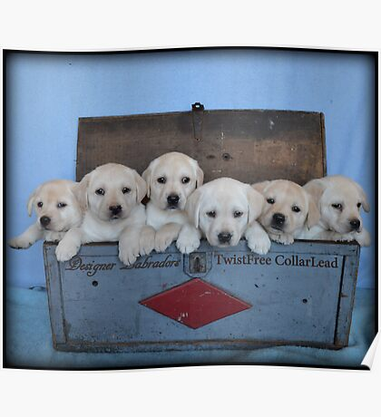 Tool box of Labradors! Poster