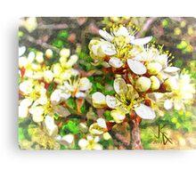 Wild Plum Flower Canvas Print