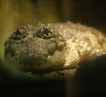 Crocodylus Moreletii by Maria Tzamtzi