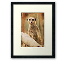 I've seen you before, haven't I? Framed Print