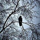 The Raven by Maria Tzamtzi
