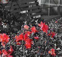 A Splash of Red  by Scott Mitchell