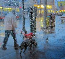 Man walks dogs in the rain by David Denny