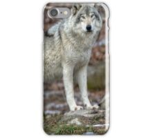 ...the King..the Grey '' or Timber Wolf.... iPhone Case/Skin
