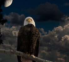 American Bald Eagle Composite by Thomas Young