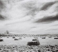 Hay Bales, Wangaratta by Linda Lees