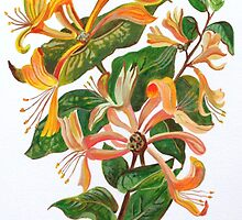 Honeysuckle Bouquet by taiche