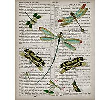 Dragonflies Psalms Photographic Print