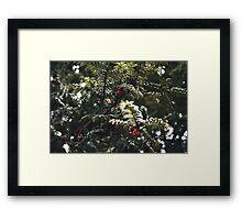 Yew Berries Framed Print