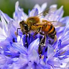 Collecting Pollen  by DebbyTownsend