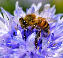 Collecting Pollen  by Deborah V Townsend