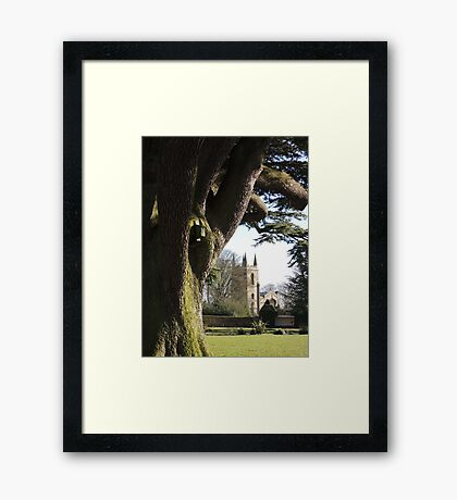 Seeds and Foundations Framed Print