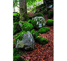 Natural Emeralds. Wicklow. Ireland Photographic Print
