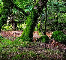 Natural Emeralds II. Wicklow. Ireland by JennyRainbow