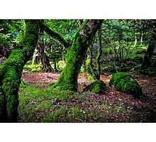 Natural Emeralds II. Wicklow. Ireland Photographic Print