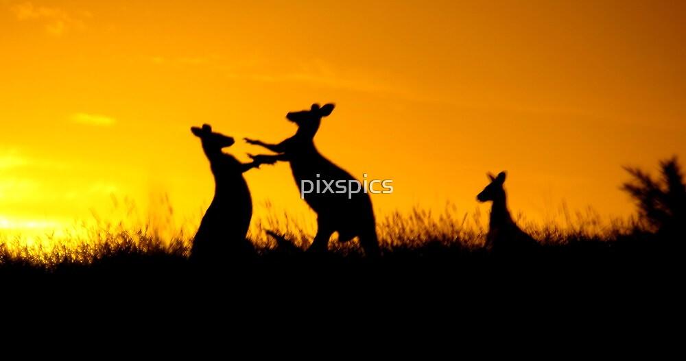 Dawn Fight at Haddon by pixspics