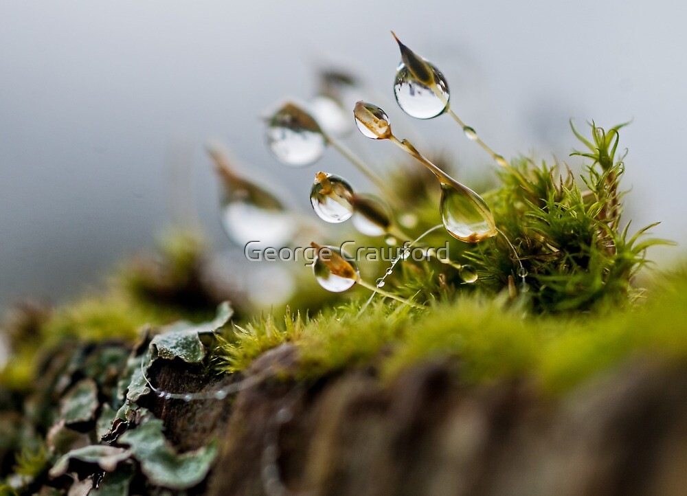 Rainy Moss Landscape by George Crawford