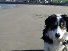 Laddie's beach by Michael Haslam