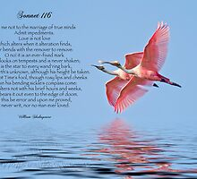 Shakespeare's Sonnet 116 by Bonnie T.  Barry