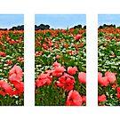 Poppyland Triptych by JohnYoung
