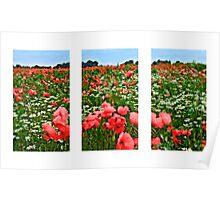 Poppyland Triptych Poster