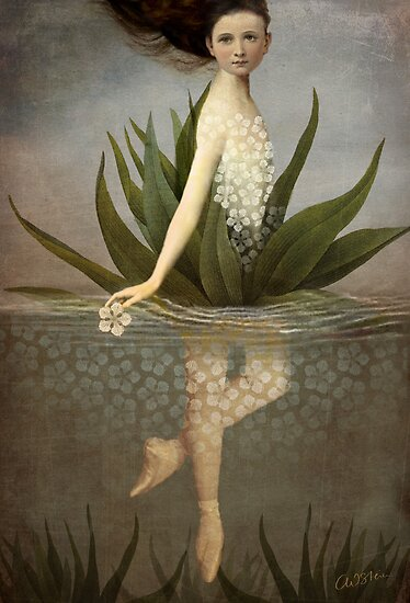 Waterlily by Catrin Welz-Stein
