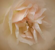 The Pink Lady by walstraasart
