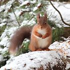 Squirrel in snow by moonunit
