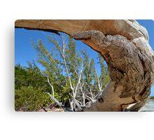 Curvy Driftwood... Canvas Print