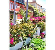 Colorful flowers in front of home Photographic Print