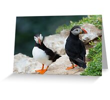 Puffins, Saltee Island, County Wexford, Ireland Greeting Card