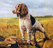 "Fine art painting "" Working for dinner"" Springer Spaniel by barryjdavisart"