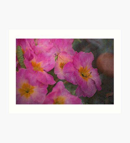 Pink Primroses Art Print