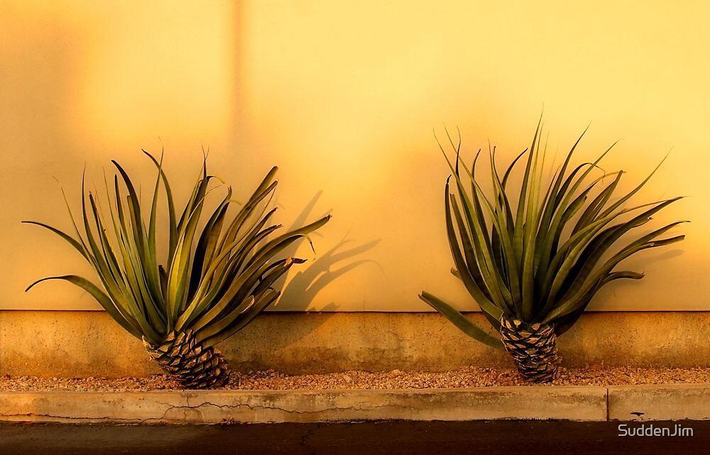 Yucca Yucca by SuddenJim